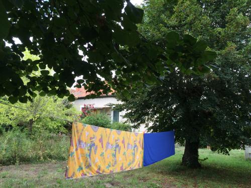 庭の大木と物干し
